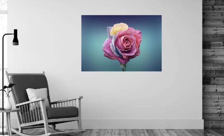 Kolorowa róża fotoobraz