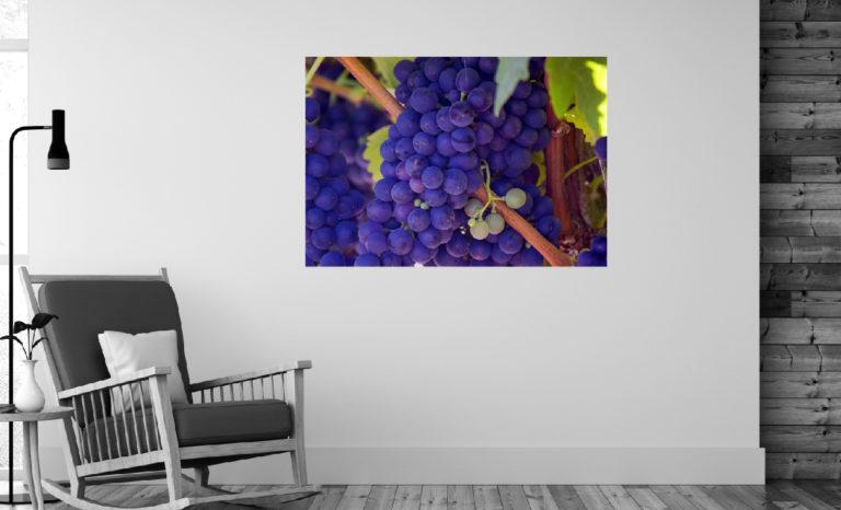 Winogrona fotoobraz