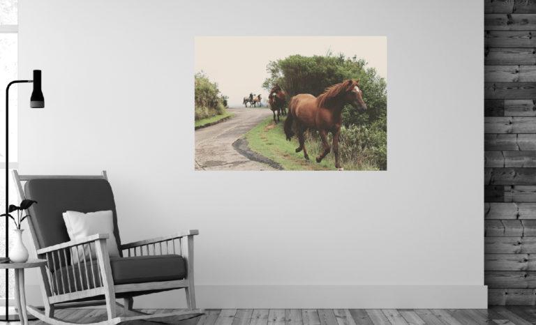 Konie fotoobraz
