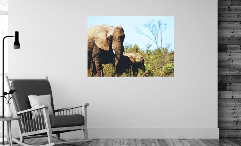 Słonie fotoobraz