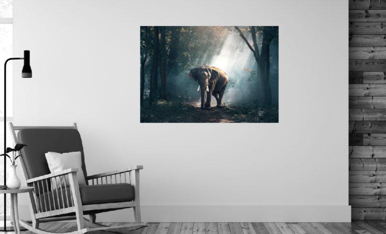Słoń fotoobraz