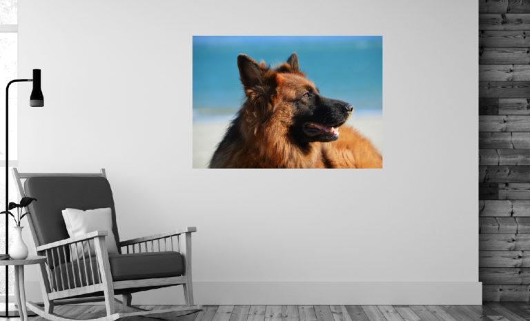 Pies fotoobraz
