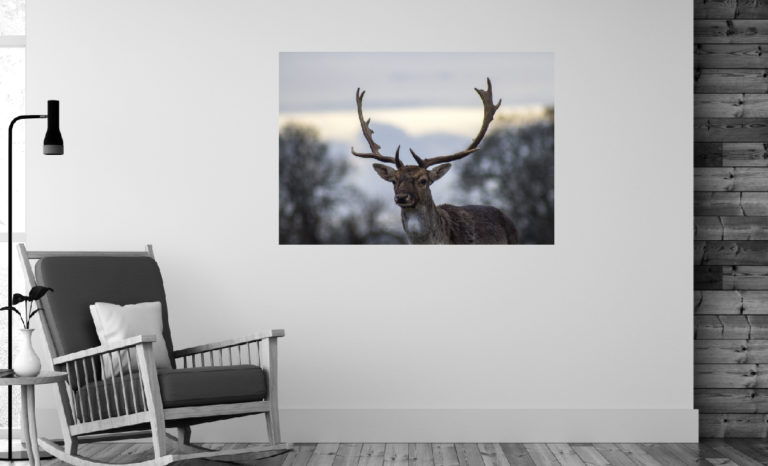 Jeleń fotoobraz