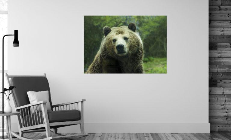 Niedźwiedź fotoobraz