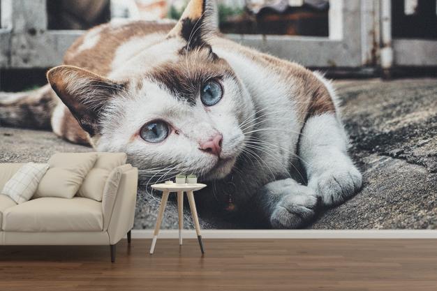 fototapeta samoprzylepna z kotem